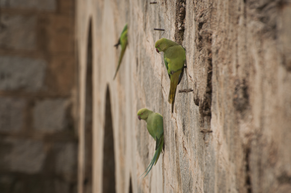 Parakeets wait for take-off clearance